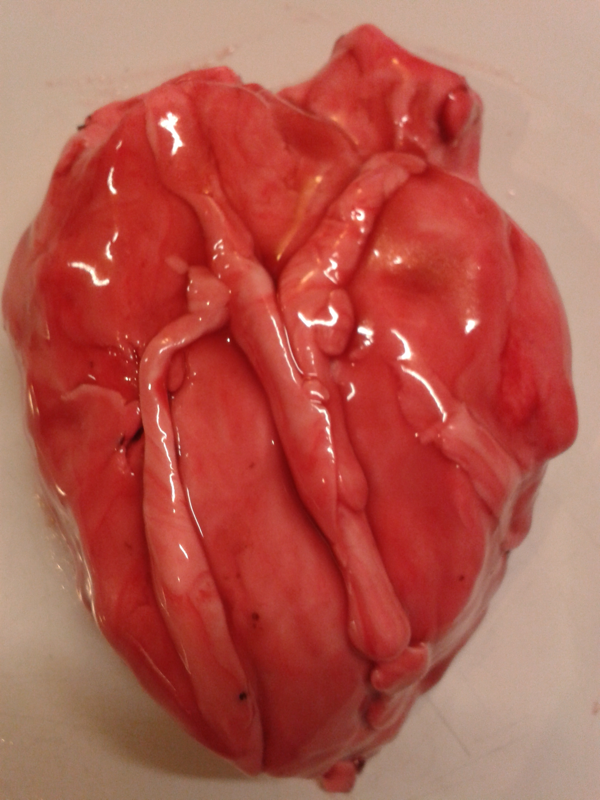real human heart beating - photo #19