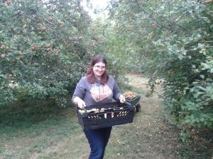 Professor Plum's Apples